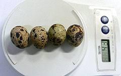 卵 カロリー の うずら